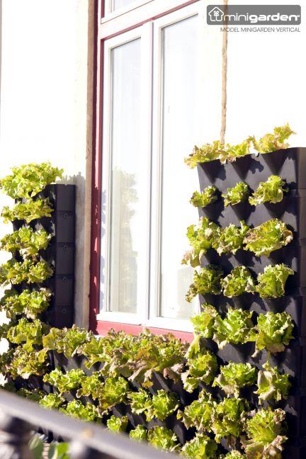 Minigarden plantevæg
